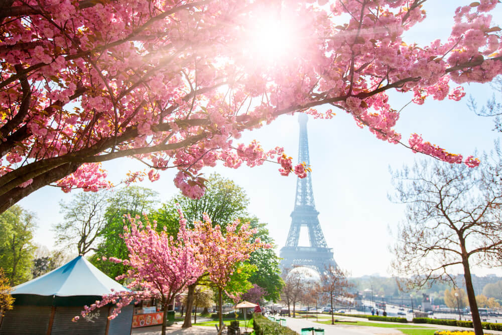 florada-cerejeiras-paris