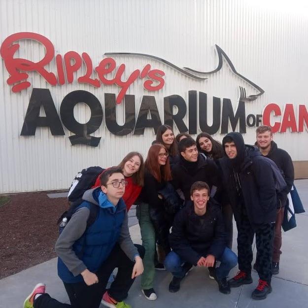 Passeio incrível ao Ripley's Aquarium