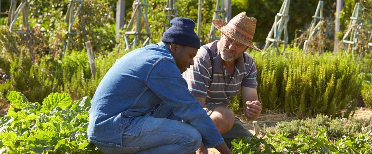 Trabalho voluntário na África do Sul: perguntas e respostas